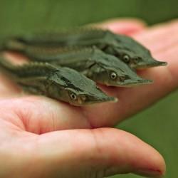 Под Тобольском появится новый рыбозавод