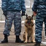 В Тобольске снизилось число краж и грабежей