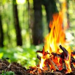 Тоболяков будут штрафовать за костры в лесу