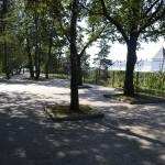 Ученые: санитарное состояние деревьев в Тобольске - удовлетворительное