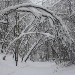 Прогулки по зимнему лесу. Фоторепортаж.