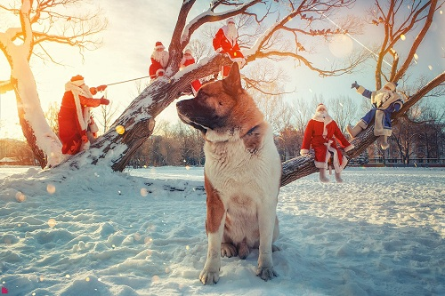 Хозяин года и Морозы