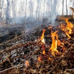 Особый противопожарный режим введут в тобольских лесах 25 апреля