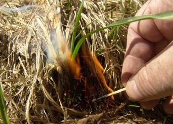 В Тобольске и окрестностях в пять раз выросло число пожаров