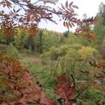Прогулки по осеннему лесу. Фото
