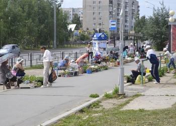 Максим Афанасьев: тобольские бабушки должны торговать комфортно и бесплатно