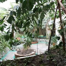 Тобольские биологи помогут обустроить школьный ботанический сад