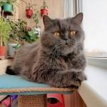 Коты нашего города: пять историй от читателей