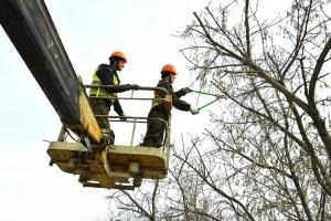 В Тобольске на главных улицах проводят обрезку деревьев