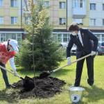 Участники акции «Сад Памяти» высадят в Тобольске кедры, сосны и яблони