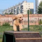 В Тобольске открыли площадку для выгула собак. Фото