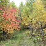 Прогулки по осеннему лесу - 2020. Фото