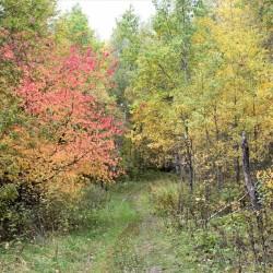 Прогулки по осеннему лесу — 2020. Фото