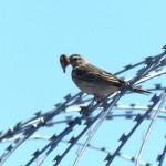 Тобольские орнитологи изучили поведение птиц возле строящегося аэропорта