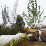 На территории СИБУРИНТЕХа высадили деревья из разных регионовстраны
