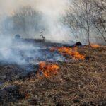 Тоболяки ощущают запах гари из-за пожаров в Тобольском районе