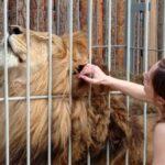 В Тобольском районе поселились бенгальские тигры и африканские львы
